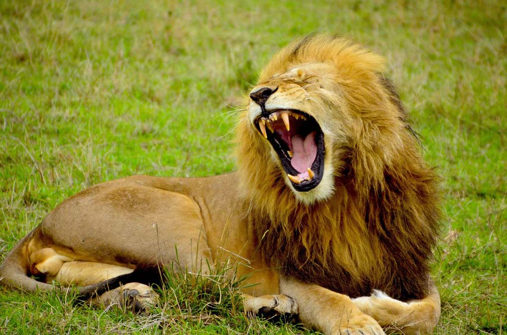 "David Allan Evans' poem ""Lions."""